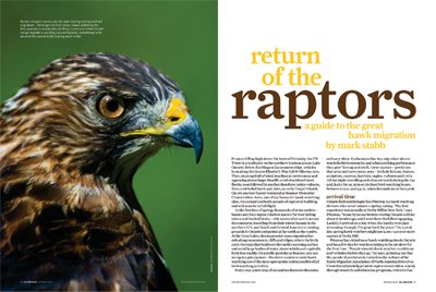 Return of the Raptors