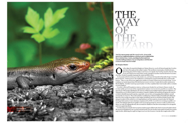 The Way of the Lizard