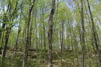 spring forest, Altberg Wildlife Sanctuary Nature Reserve, credit: Eric Davis