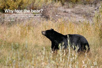 Why fear the bear?