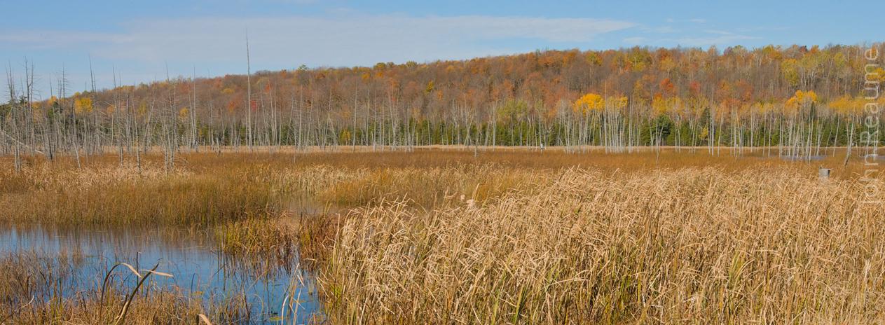 Can we halt the decline of wetlands?