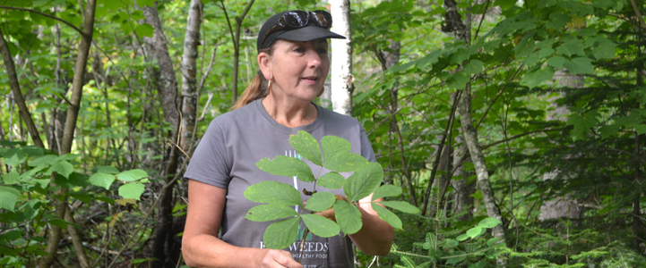Karen Stephenson discussing sarsaparilla, credit: Ontario Nature/Mallory Vanier