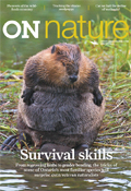 ON Nature Fall 2015, North American beaver, Survival skills