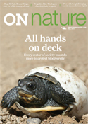 ON Nature Fall 2015, Blanding's turtle hatchling, all hands on deck