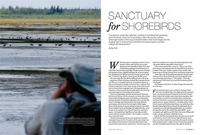 Sanctuary for Shorebirds
