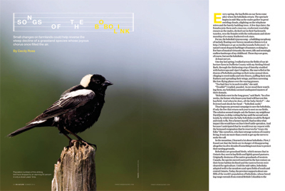 Songs of the Bobolink