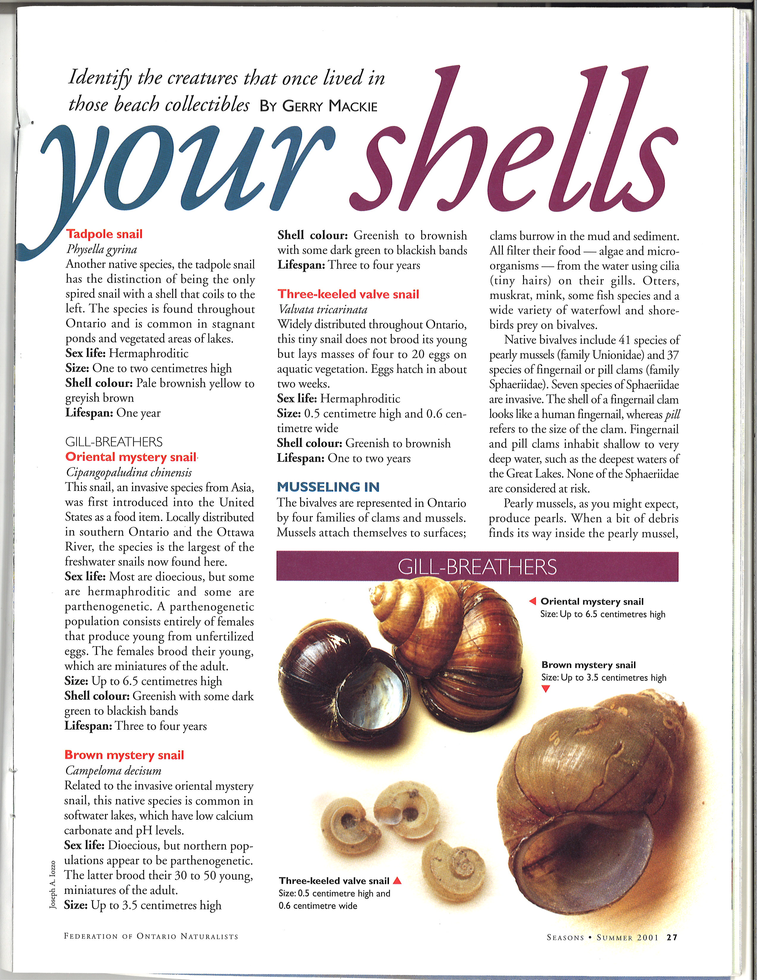 p27_know_your_shells_seasons_summer_2001-21