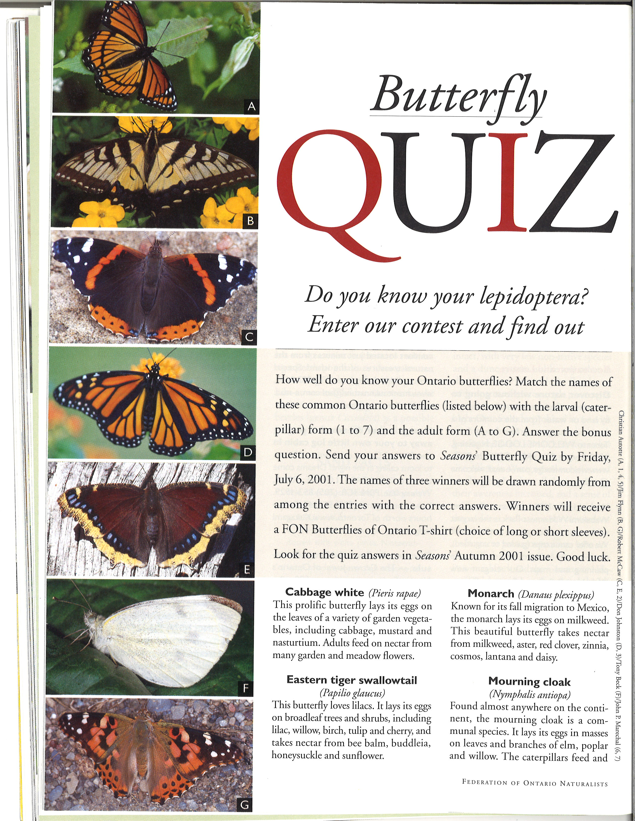 Butterfly quiz – Seasons Summer 2001