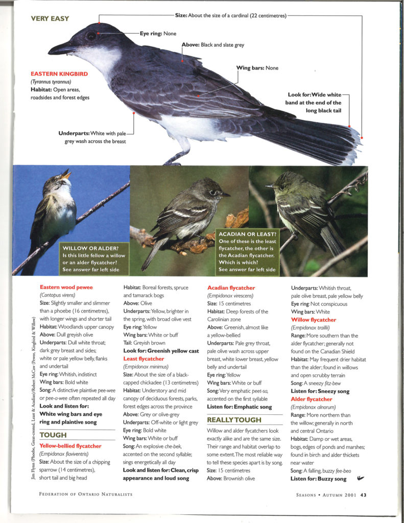 Flycatcher guide Seasons Fall 2001