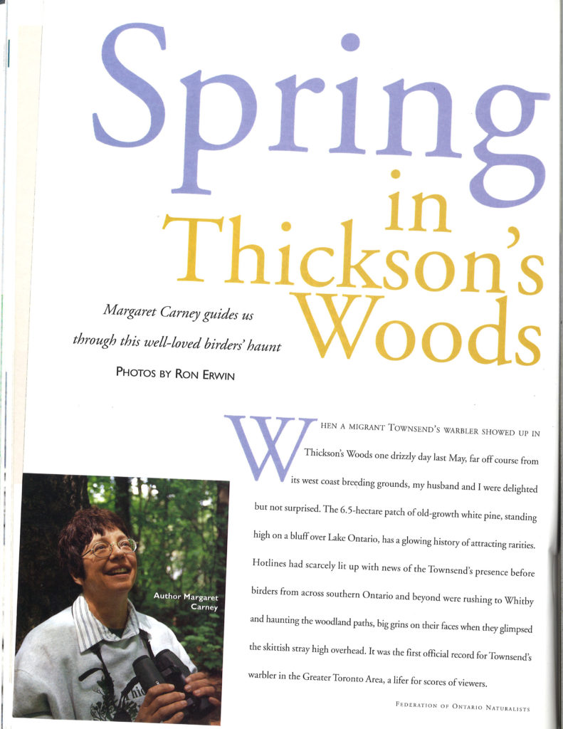 Spring in Thickson's Woods