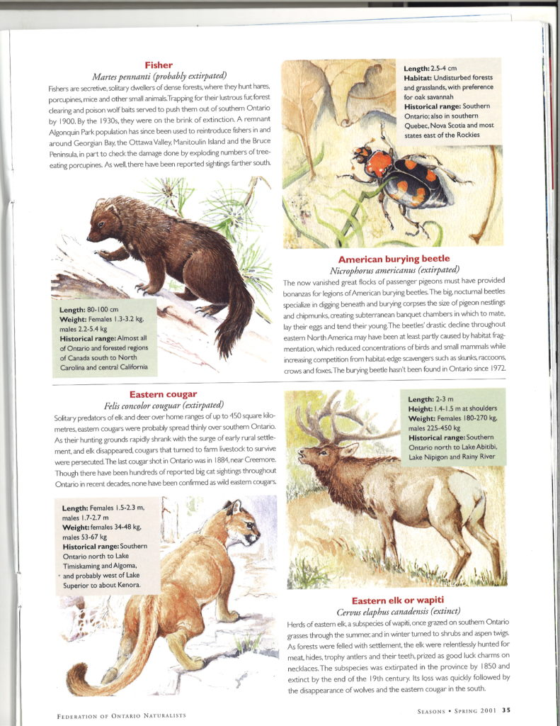 Seasons_Spring_2001_Vol41_No1_pg35_Extinct_Animals