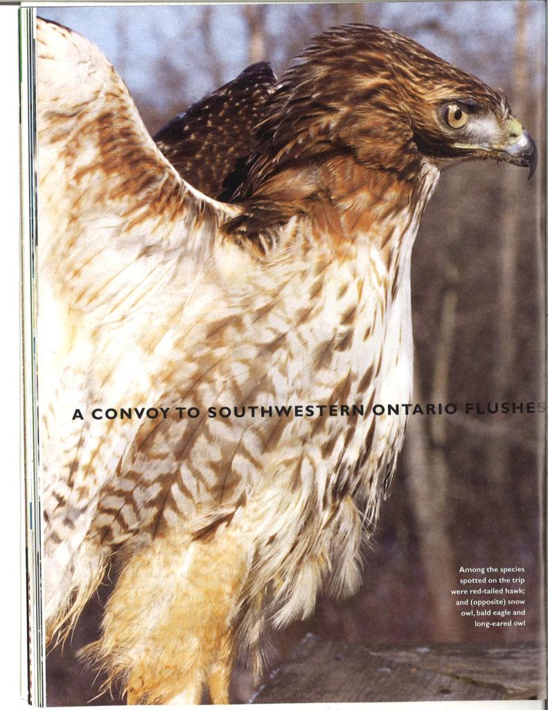 Seasons Winter 2001 Winter raptors