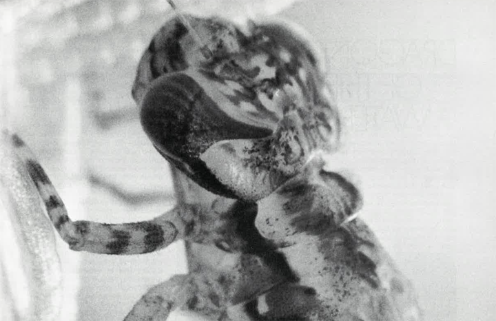 Ontario Naturalist Magazine March 1972