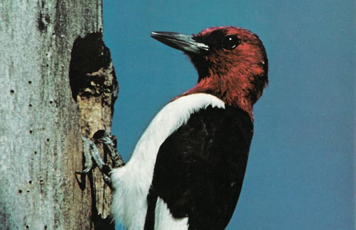 Ontario Naturalist Magazine Spring 1979