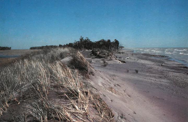 Seasons Spring 1981
