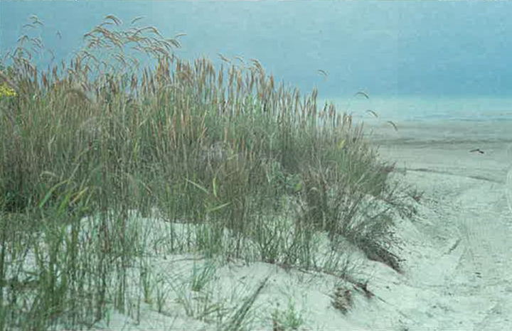 Seasons Spring 1984