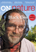 ON Nature Summer 2016, Black flies, Why the scourge of the outdoors deserves our respect