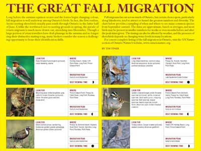 The great fall migration