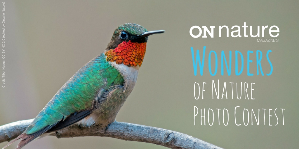 ON Nature Magazine's Wonders of Nature Photo Contest