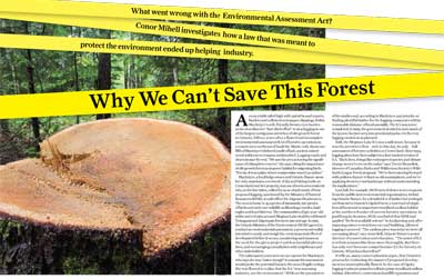 Why we can't save this forest