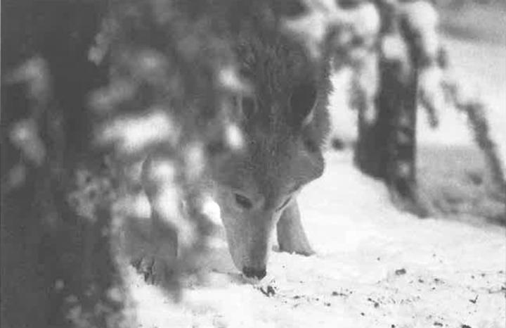 Seasons Winter 1989