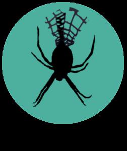 Yellow garden spider - Dan Schneider_cutout_3