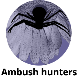 goldenrod_crab_spider_dan_schneider_2_v7