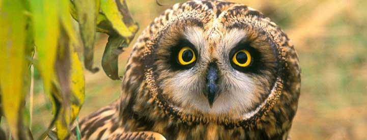 Ontario Nature's Biodiversity Charter