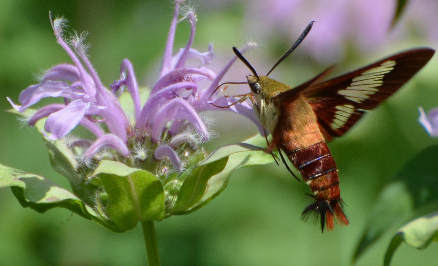 Butterfly and Moth Guide - photo#45