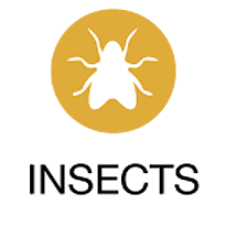 insects_icon_2