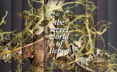 The secret world of lichen