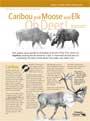 Caribou, Moose & Elk