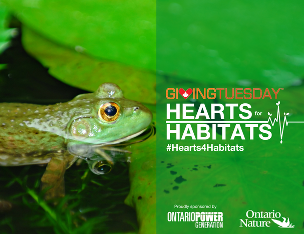 Today is Giving Tuesday: Have a Heart for Habitats