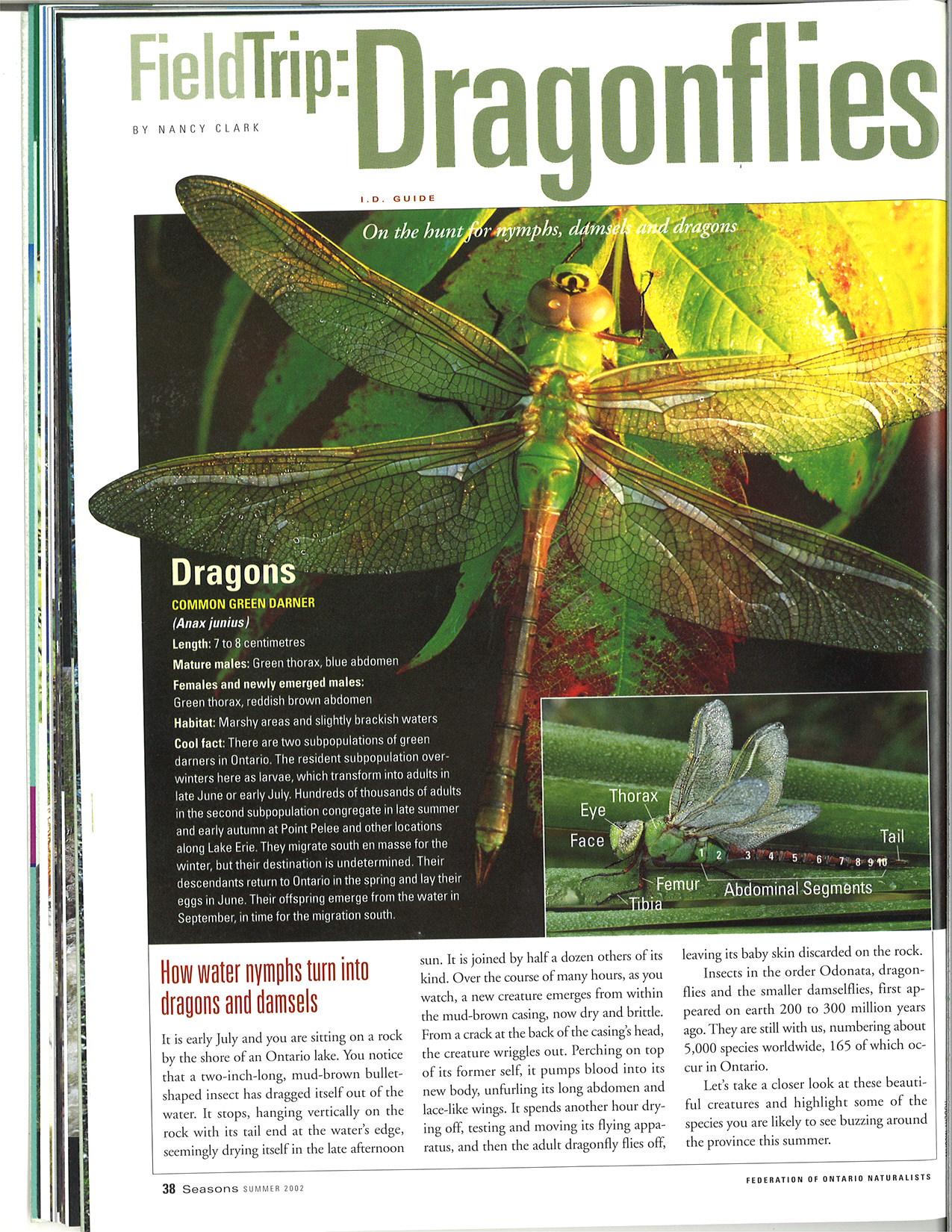 seasons_2002_v42_i1_d_feild_trip_dragonflies_38