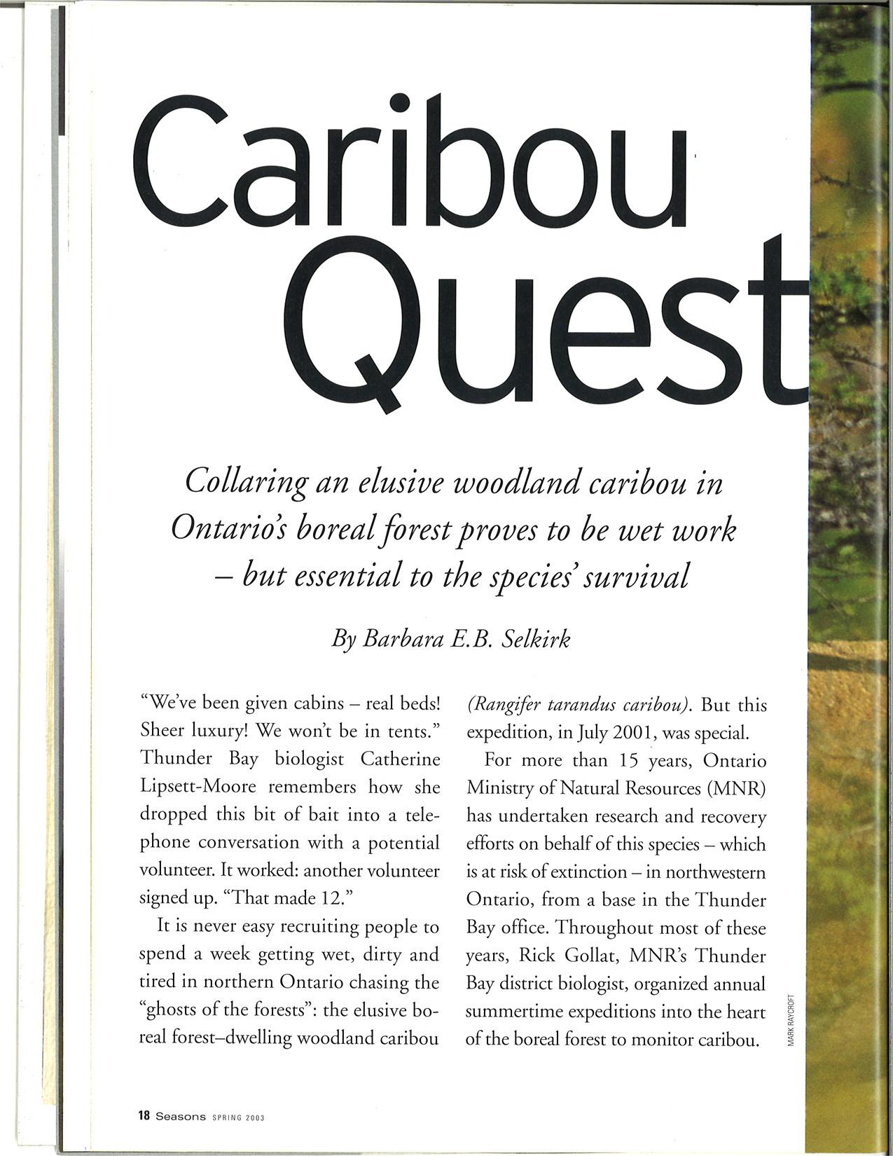 seasons_2003_v43_i1_f_caribou_quest_18