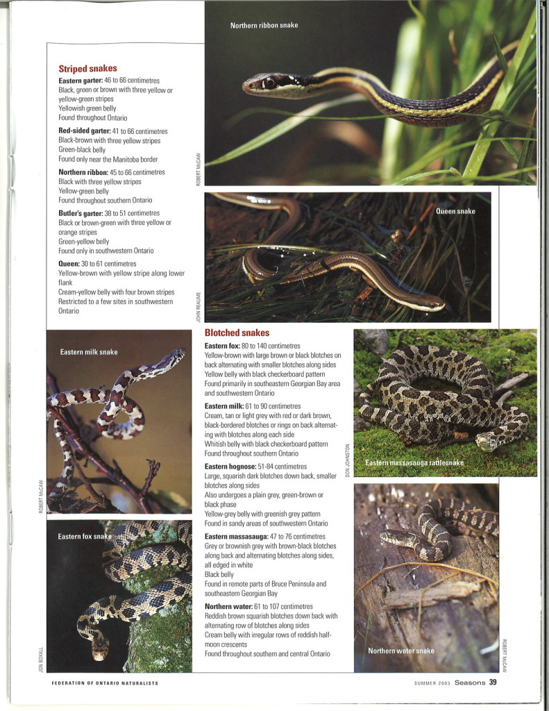 seasons_2003_v43_i2_d_Field_Trip_Snakes_39