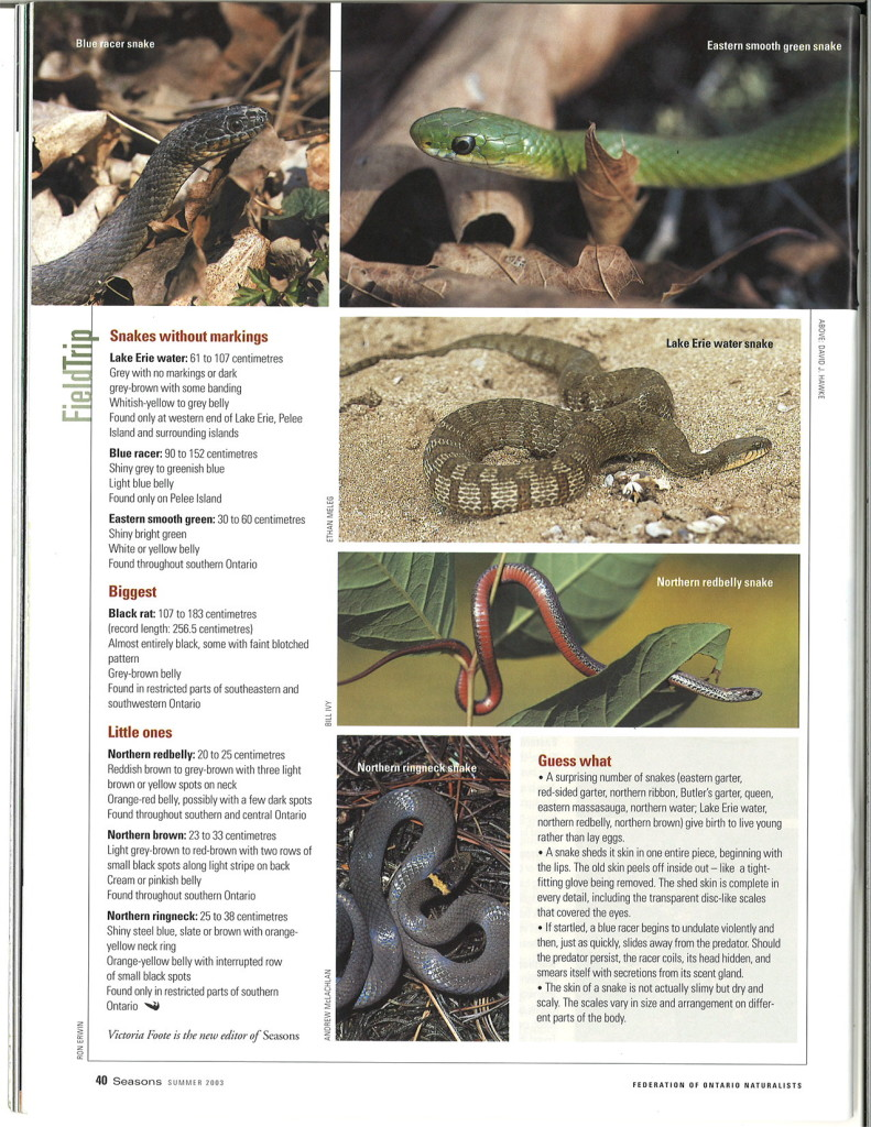 seasons_2003_v43_i2_d_Field_Trip_Snakes_40