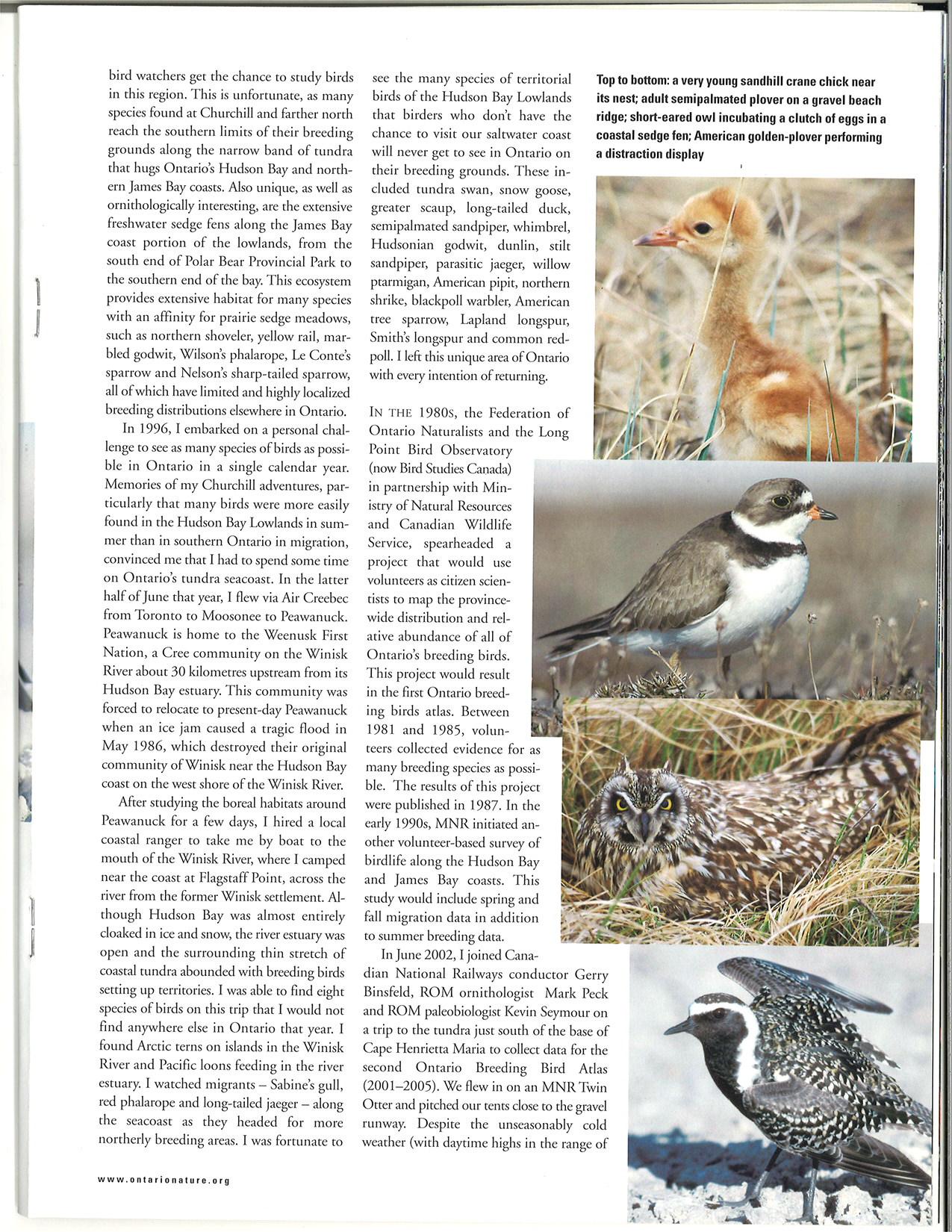 seasons_2003_v43_i4_birding_in_the_far_north_25