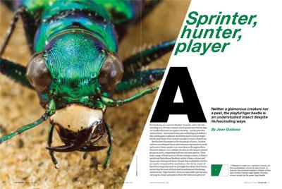 Sprinter, hunter, player