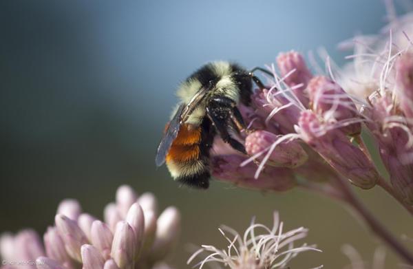 Letters – Cambridge Pollinator Preserve