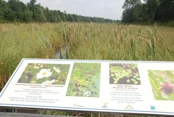 A wetland interpretive sign at Mashkinonje Provincial Park, credit: Back Roads Bill