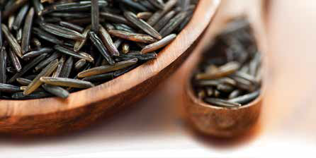 Wild rice, credit: Alejandro Rivera / Signature Collection / Getty Images