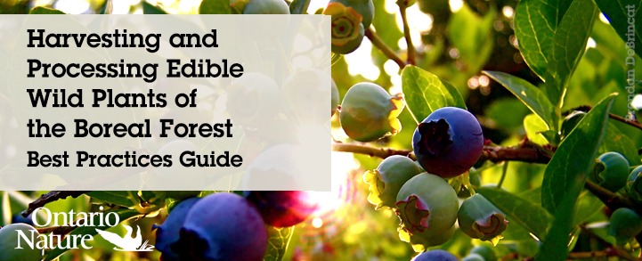 Edible Wild Plant Guide
