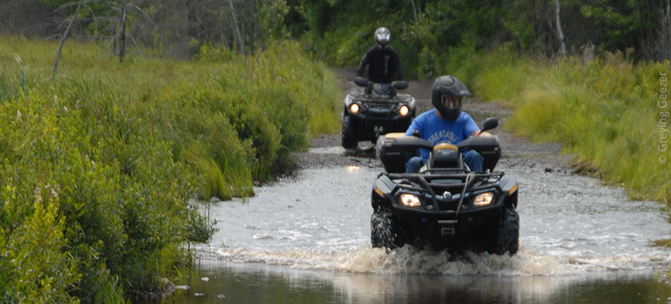 ATVs driving through wetland harming stream wildlife