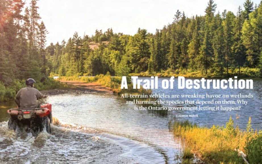 A Trail of Destruction, ON Nature Fall 2020, ATV damage