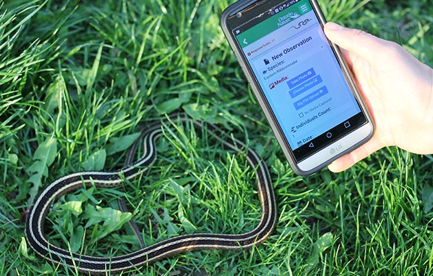 Using the updates Ontario Reptile and Amphibian Atlas app, Jory Mullen