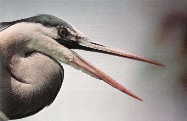 Ontario Naturalist Magazine August 1977