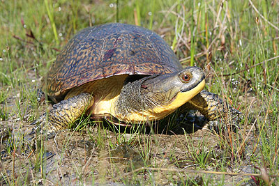 Development crushes turtles