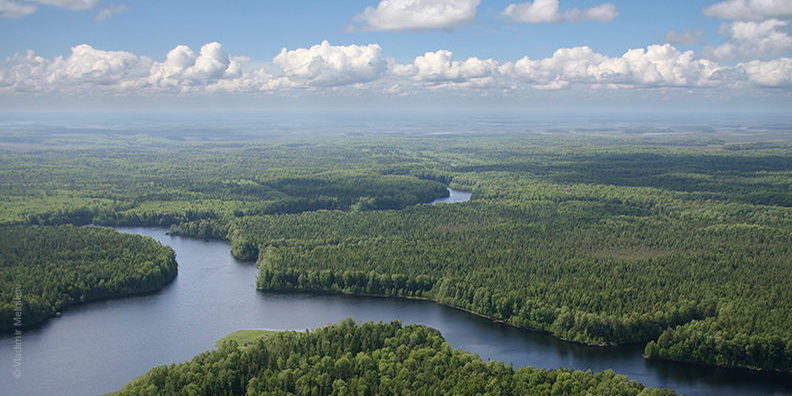beautiful aerial image of boreal forest