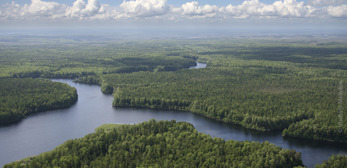 Boreal forest aerial